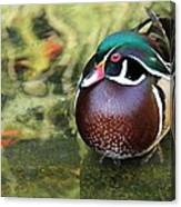 Wood Duck Be Still Canvas Print