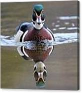 Wood Duck Drake Frontal Canvas Print