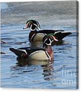 Wood Duck Drake Pair Canvas Print
