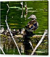 Wood Duck Family Canvas Print
