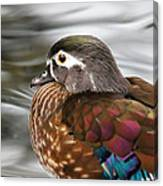 Wood Duck Hen Canvas Print