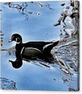Wood Duck In Motion Canvas Print