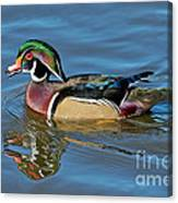 Wood Duck Male Calling Canvas Print