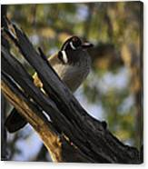 Wood Duck Morning Canvas Print
