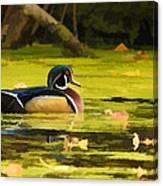Wood Duck On Pond    Canvas Print