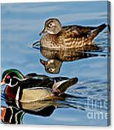 Wood Duck Pair Swimming Canvas Print