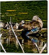 Wood Duck Rest Time Canvas Print