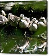 Wood Ducklings On A Log Canvas Print