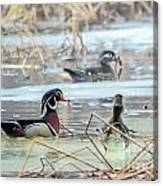 Wood Ducks In The Mist Canvas Print
