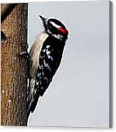 Wood Pecker Canvas Print