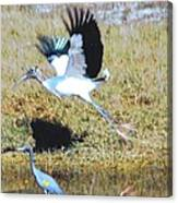 Wood Stork And Blue Heron Canvas Print