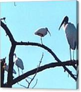 Wood Stork And Ibis Canvas Print