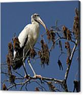 Wood Stork Canvas Print