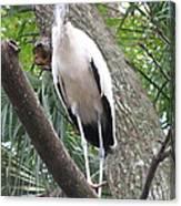 Wood Stork On A Limp Canvas Print