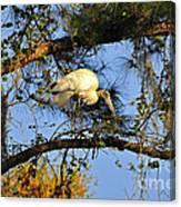 Wood Stork Perch Canvas Print