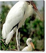 Wood Stork With Nestling Canvas Print
