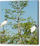 Wood Storks In The Everglades Canvas Print