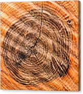 Wood Surface With Annual Rings Canvas Print