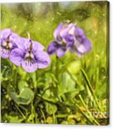 Wood Violet Canvas Print
