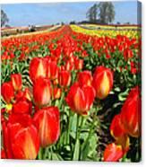 Woodburn Tulip Fields Canvas Print