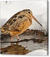 Woodcock In Winter Canvas Print