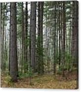 Wooded Panorama In Our Northeast Canvas Print