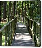 Wooden Boardwalk Through The Forest Canvas Print