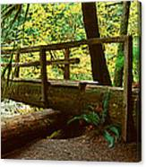 Wooden Bridge In The Hoh Rainforest Canvas Print