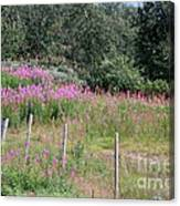 Wooden Fence And Pink Fireweed In Norway Canvas Print