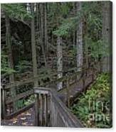 Wooden Forest Trail  Canvas Print