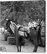 Wooden Horse6 Canvas Print
