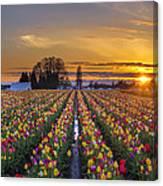Wooden Shoe Tulip Festival Sunset Canvas Print