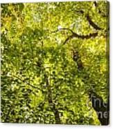 Woodland Background 02 Canvas Print