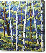 Woodland Birches Canvas Print