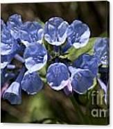 Woodland Blue Canvas Print