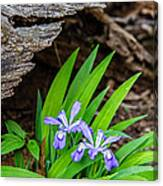 Woodland Dwarf Iris Wildflowers Canvas Print