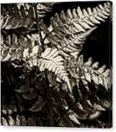 Woodland Fern Canvas Print