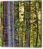 Woodland Morning Canvas Print
