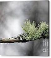 Woodland Moss Canvas Print