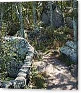 Woodland Path With Stone Wall Canvas Print