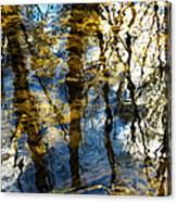 Woodland Reflections Canvas Print