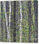 Woodland Spring Canvas Print