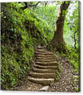 Woodland Stairs Canvas Print