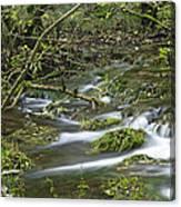 Woodland Stream - Monk's Dale Canvas Print