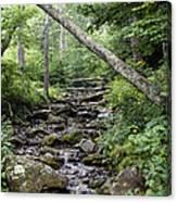 Woodland Streambed Canvas Print