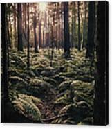 Woodland Trees Canvas Print