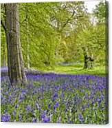 Woodland Walk In Blue Canvas Print