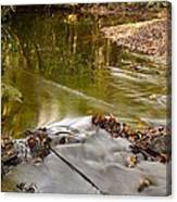 Woodland Water Canvas Print