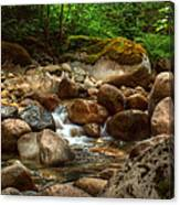 Woodland Waters Canvas Print