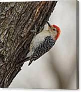 Woodpecker Canvas Print